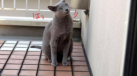 オトちゃんのはうっ!