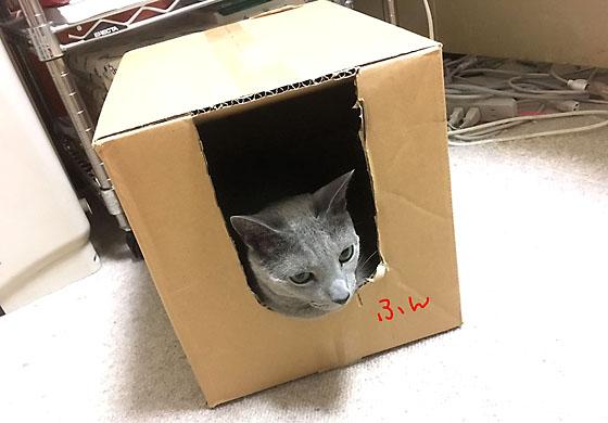 オトちゃんハウス